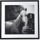 Black & White Horse Picture